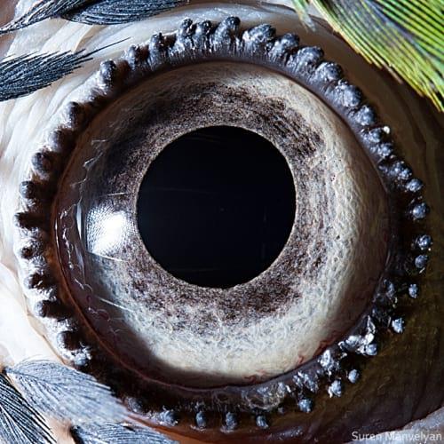 چشم حیوانات (1)