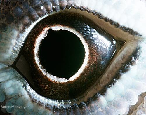 چشم حیوانات (10)
