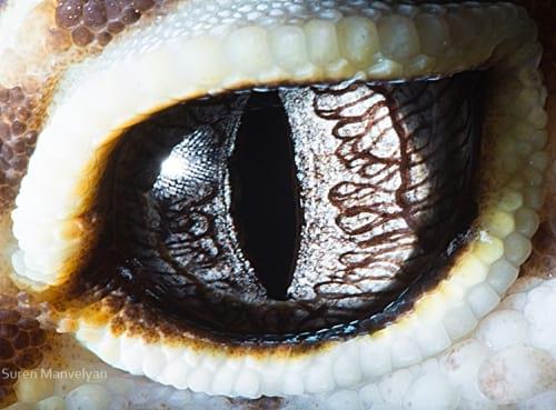 چشم حیوانات (12)