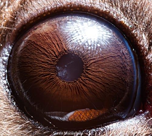 چشم حیوانات (13)