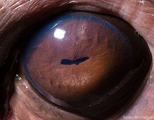 چشم حیوانات (14)