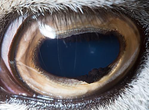 چشم حیوانات (15)