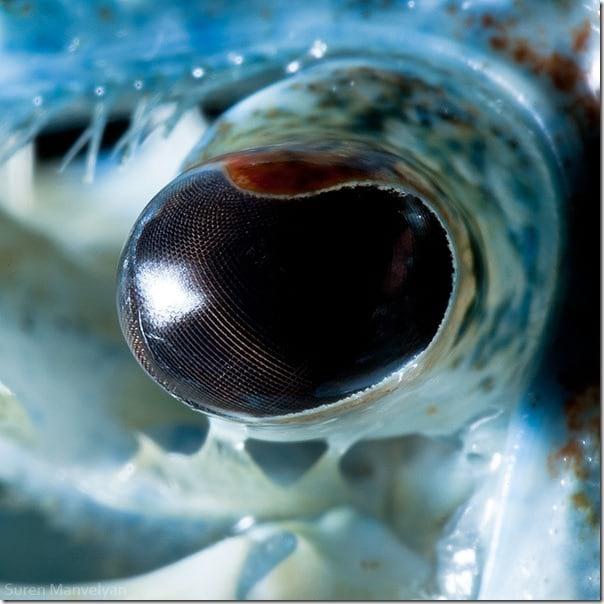 چشم حیوانات (16)