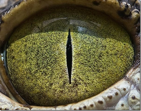 چشم حیوانات (19)