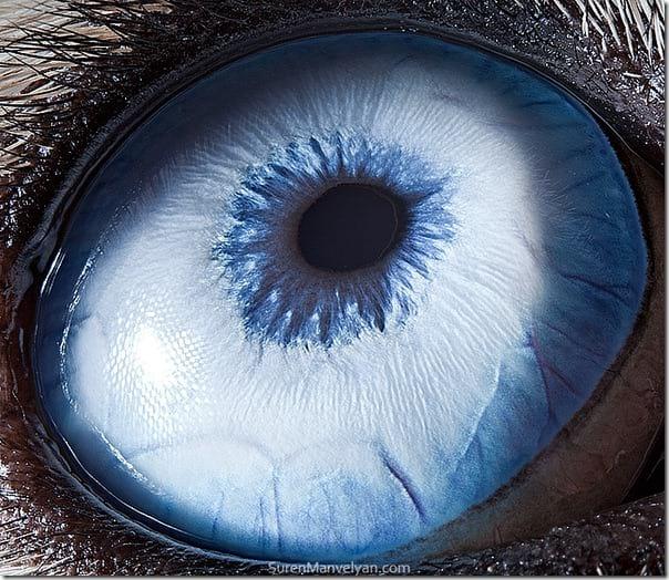 چشم حیوانات (20)
