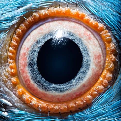 چشم حیوانات (4)