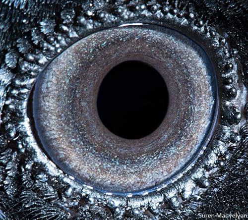 چشم حیوانات (5)