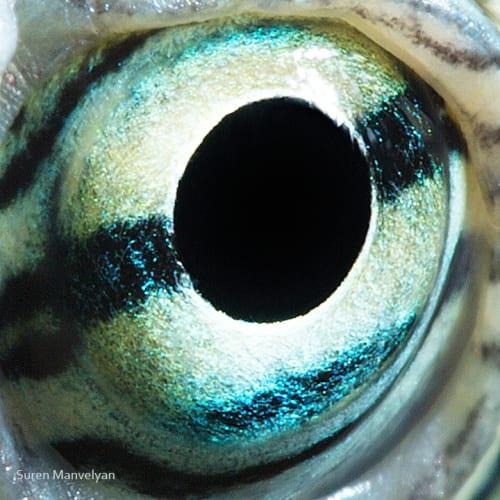 چشم حیوانات (7)