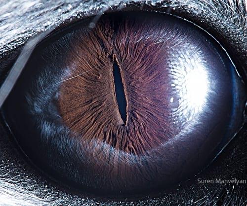 چشم حیوانات (8)