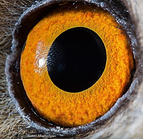 چشم حیوانات (9)