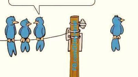 وقتی پرندگان وای فای دار میشن!