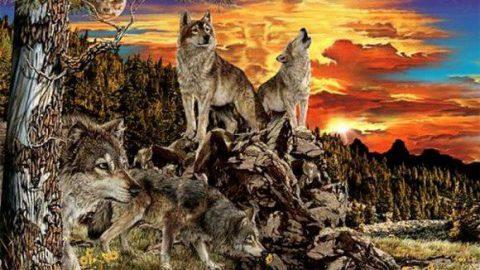 در تصویر چند گرگ می بینید؟