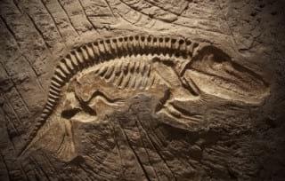 15603461-model-dinosaur-fossil