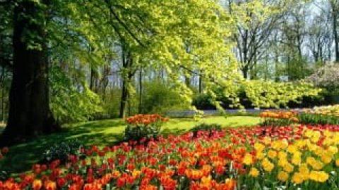 بهار، عشق ، انتظار