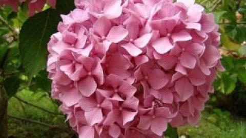 پنج گل زیبا، اما مرگ آفرین