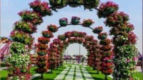 طراحی زیبا با گل های طبیعی