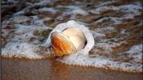 برق صدف تو دریا