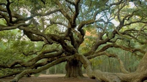 عجیب ترین درختان دنیا