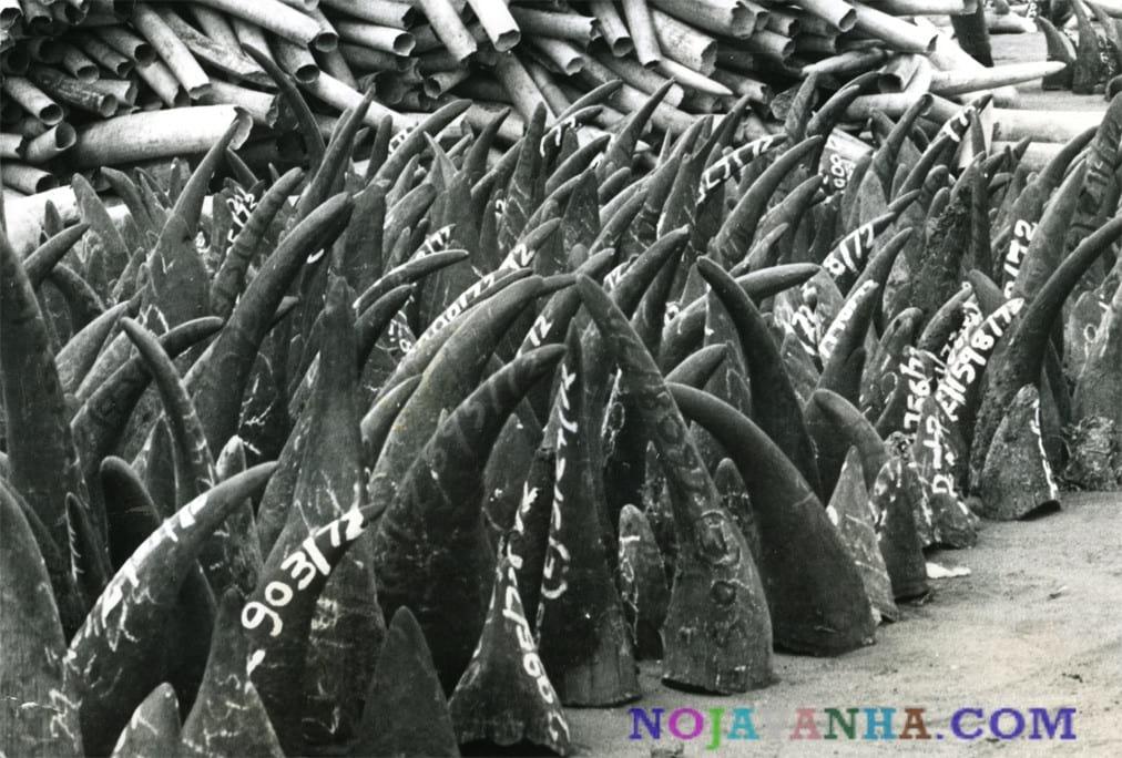 شاخ حیوانات شکار شده