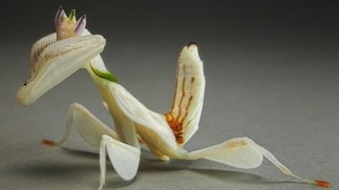 عجیب ترین گل و گیاهان دنیا