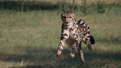 رکورد داران ورزشی در میان حیوانات
