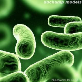 باکتری ها