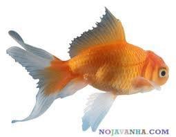 زیست ماهی