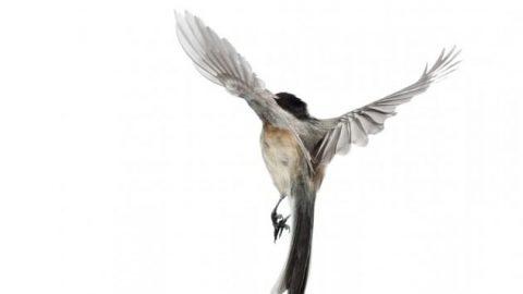 عکاسی از پرواز پرندگان