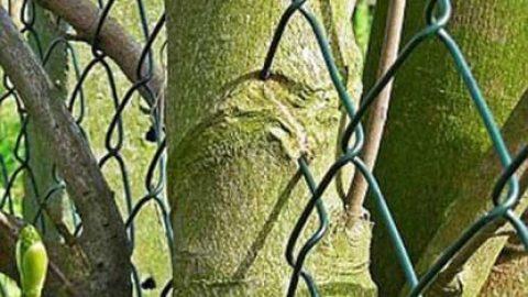 درختان عجیبی که اشیاء اطراف خود را می بلعند!