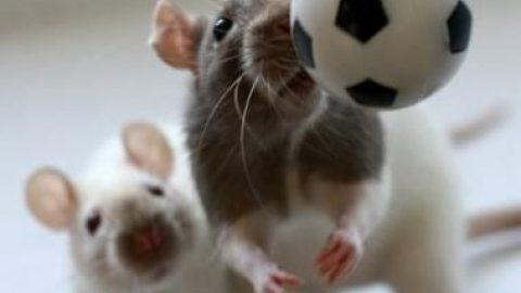وقتی موش ها سوژه عکاس می شوند!!!