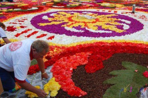 فرشی دیدنی از گل های چشم نواز