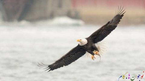چند نکته برای شروع عکاسی از پرندگان