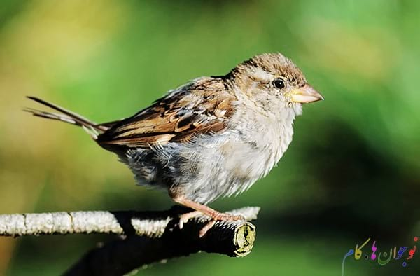 Sparrow-Perching-On-A-Branch