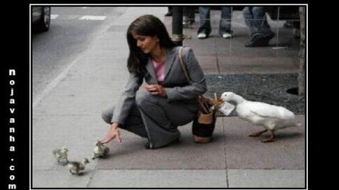 اردکا هم بله!