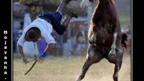 وفتی یه اسب از سواری دادن خسته میشه!