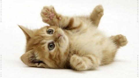 بیایید بیشتر با گربه ها آشنا شویم