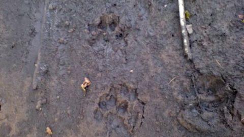 از رد پای حیوانات قالب بسازید