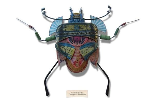 insect.nojavanha (10)