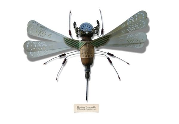 insect.nojavanha (11)