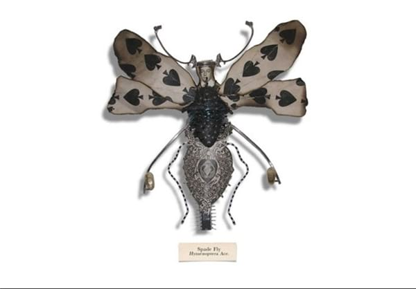 insect.nojavanha (14)