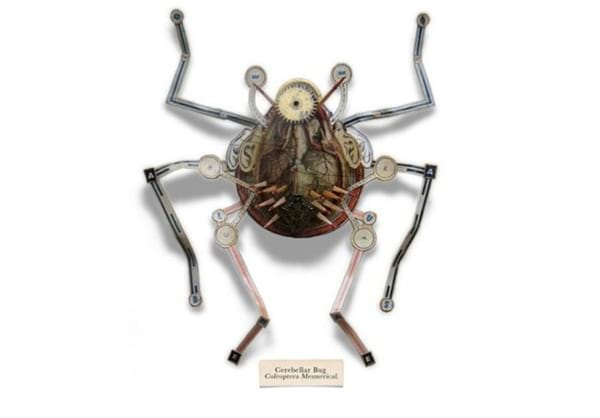 insect.nojavanha (9)