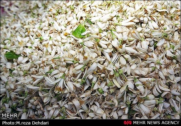 عطر بهار نارنج شیراز