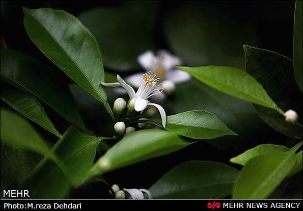 spring (5)