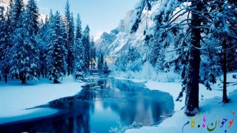 حیوانات چگونه زمستان های سرد را پشت سر می گذرانند؟