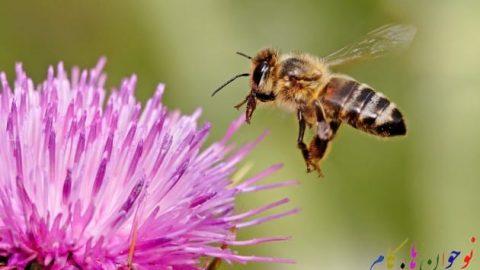 زنبورها برای گم نکردن راه خانه چه می کنند؟