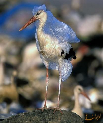 Environmental Pollution.nojavanha