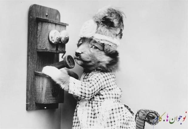 سگ در کارت پستال های صدسال پیش