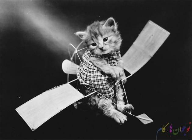 گربه در  کارت پستال های صدسال پیش