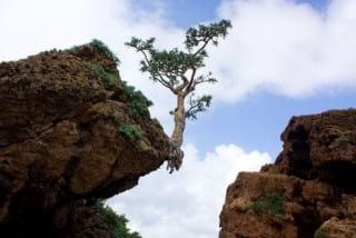 Socotra.nojavanha (20)