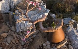Socotra.nojavanha (22)